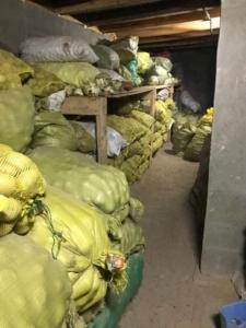 Ernte im Kellerlager